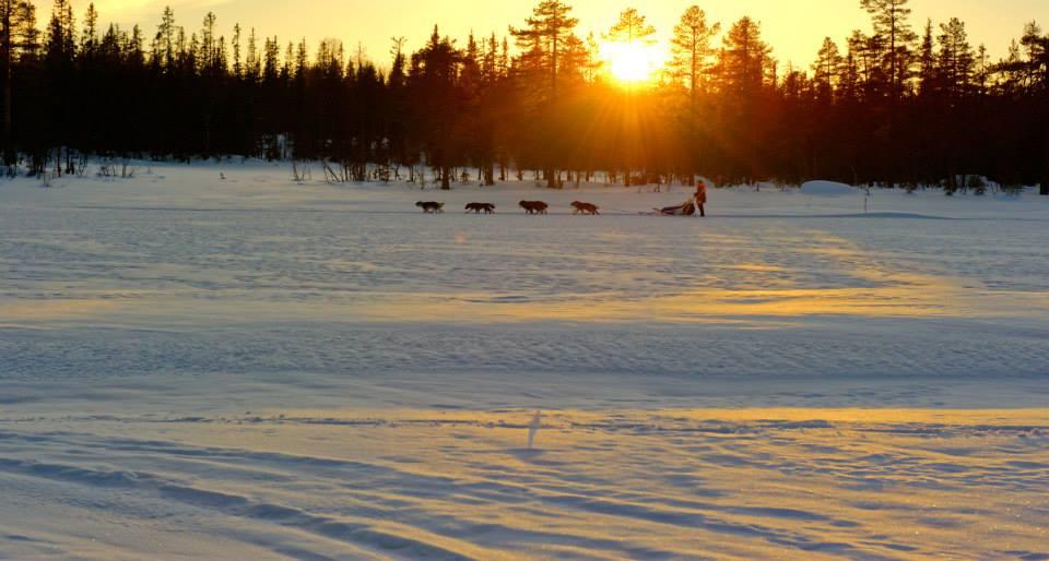 Spann i solnedgang Langen1 HS2015. Foto: Per Olav
